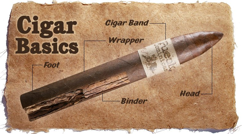different parts of a cigar